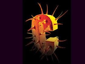 Hepatit C Nedenleri