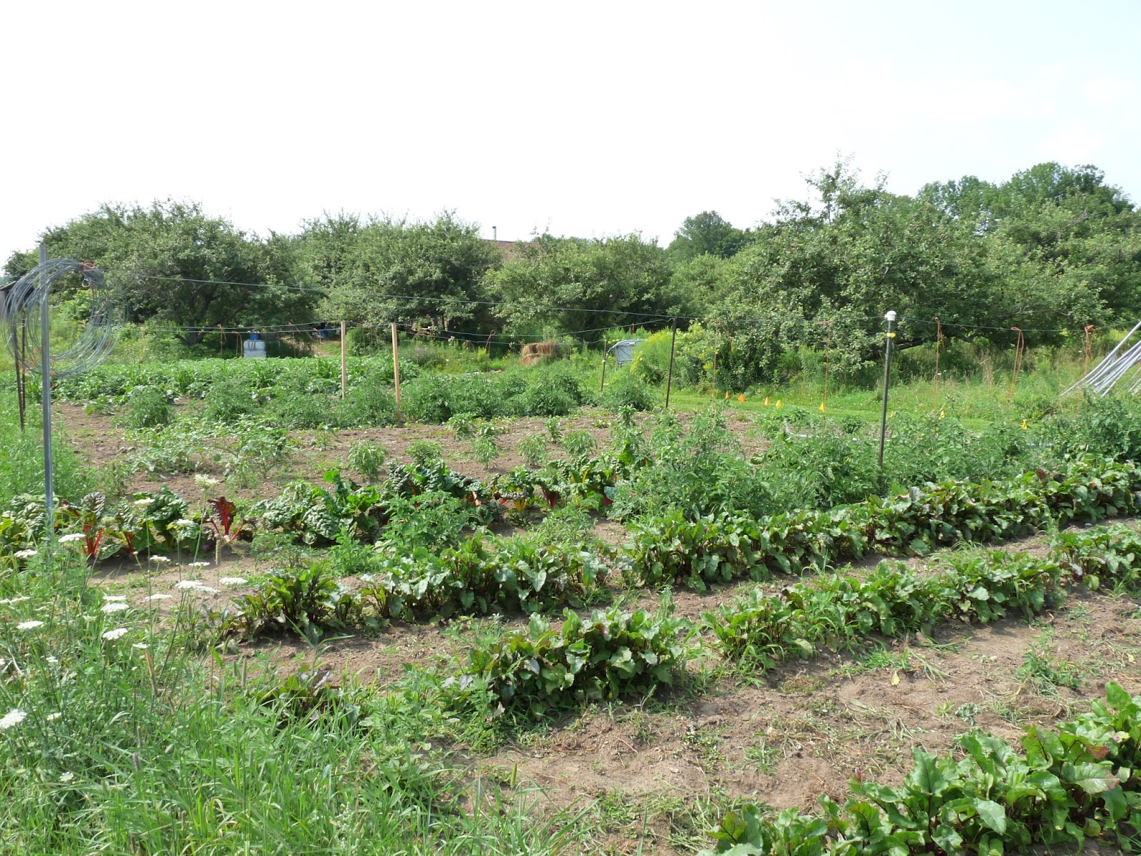 Seasonal ontario food so how big should your vegetable for Large vegetable garden