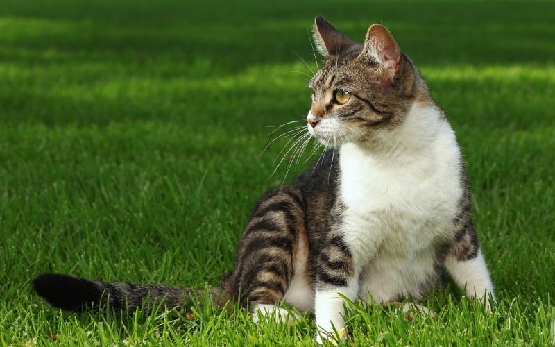 Alasan Kucing Membawakan Hasil Buruan pada Tuannya
