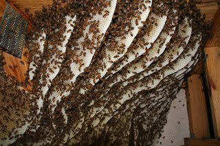 Deformutilation Honeybee Home Invasions