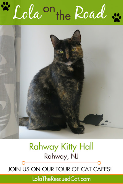rahway kitty hall|cat cafe|lola on the road