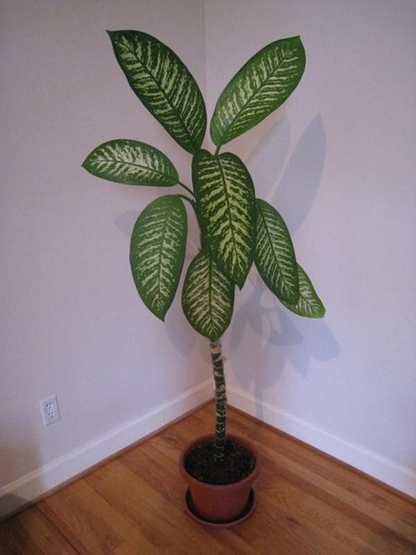 Plantas Peligrosas Que Te Pueden Engañar Y Que Quizás Están Más