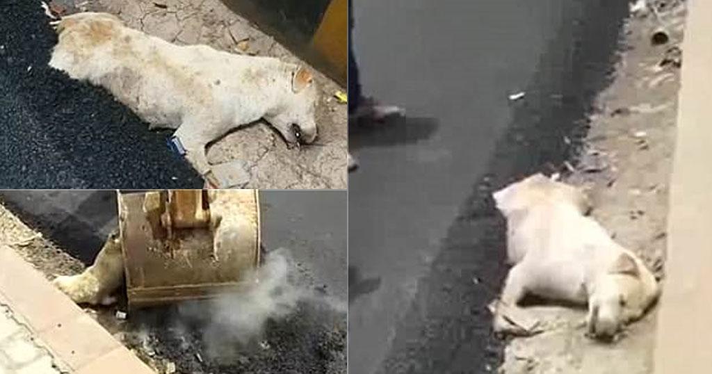 Oικοδόμοι ασφαλτόστρωσαν σκύλο που κοιμόταν και τον έκαναν δρόμο