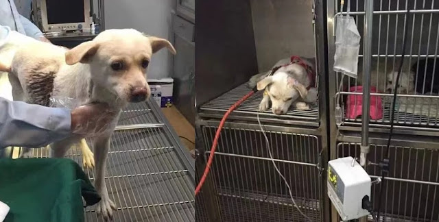 This Poor Dog Was Pierced By An Arrow, What Happened After Is A Miracle! Must See!
