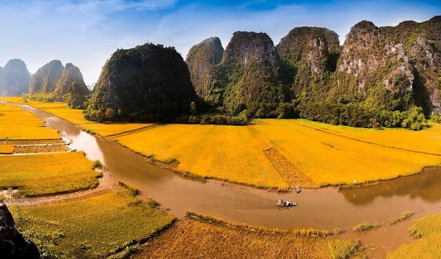 Vietnam is wonderful in ripen rice season 6
