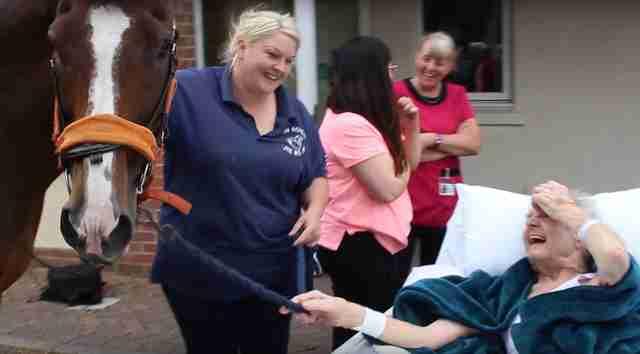 Su sueño era ver un caballo antes de morir y pudo lograrlo