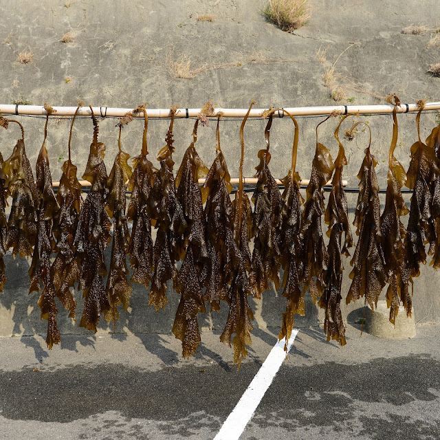Did seaweed make us who we are today?