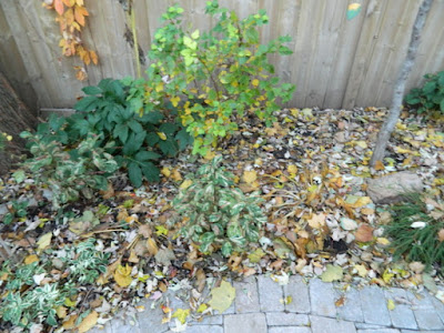 Toronto Cabbagetown garden makeover before Paul Jung Gardening Services