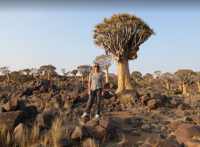 Quiver Tree Forest Keetmanshoop