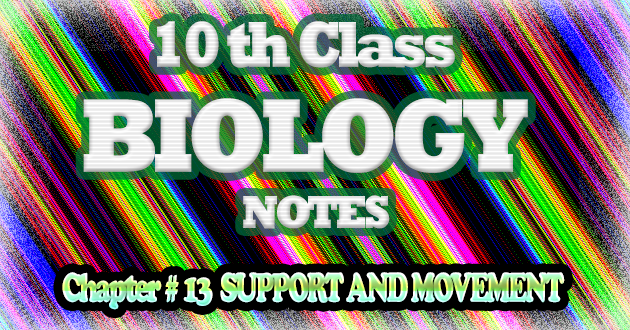 10th Class Biology Notes Chapter # 13 Support And Movement