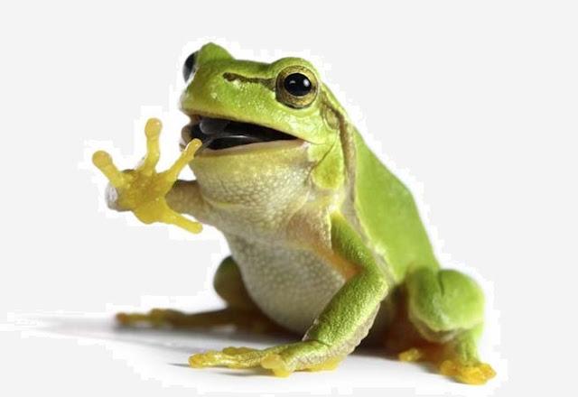 katak berkembangbiak