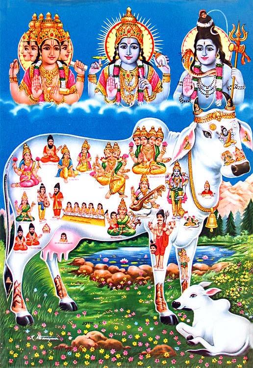 Cow: 33 Crore Gods