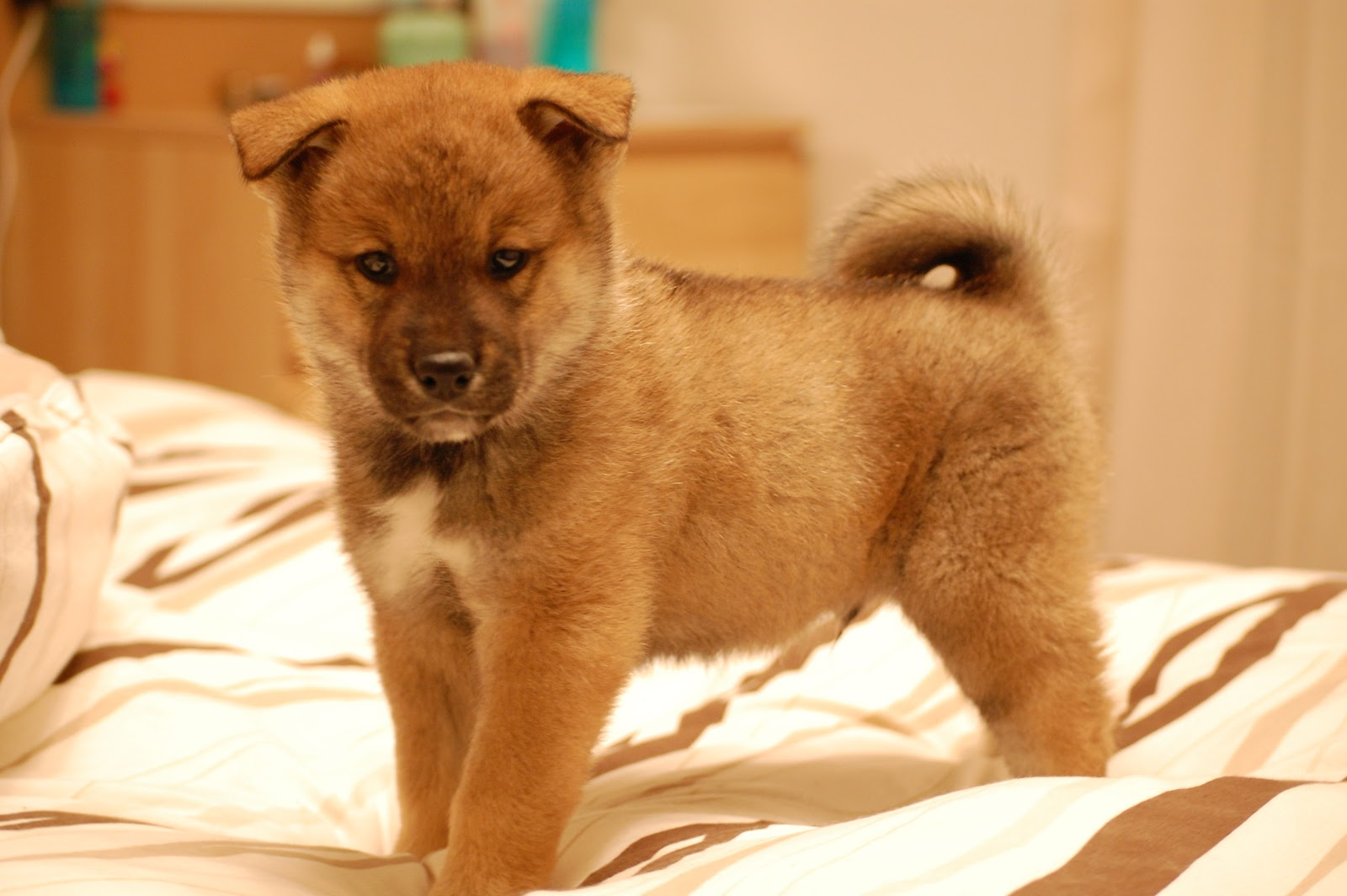 Japanese Dog Names: Japanese Names That Start With L