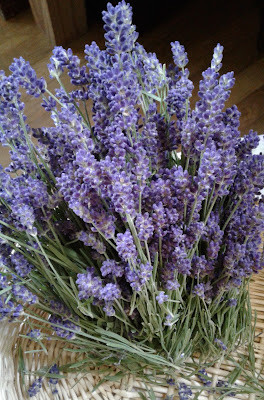 cut lavender stems and flowers
