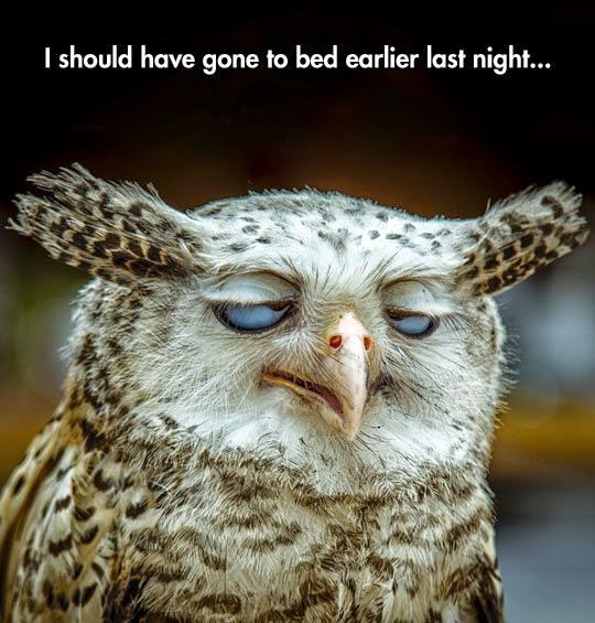 Funny I should have gone to bed earlier last night Tired Owl Joke Picture