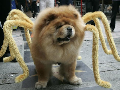 animais fantasiados para o Halloween
