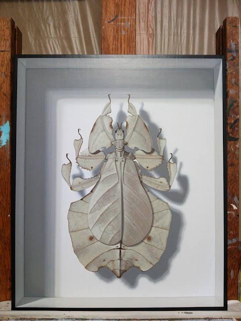 1000円札に擬態したコノハムシ、アート、制作風景