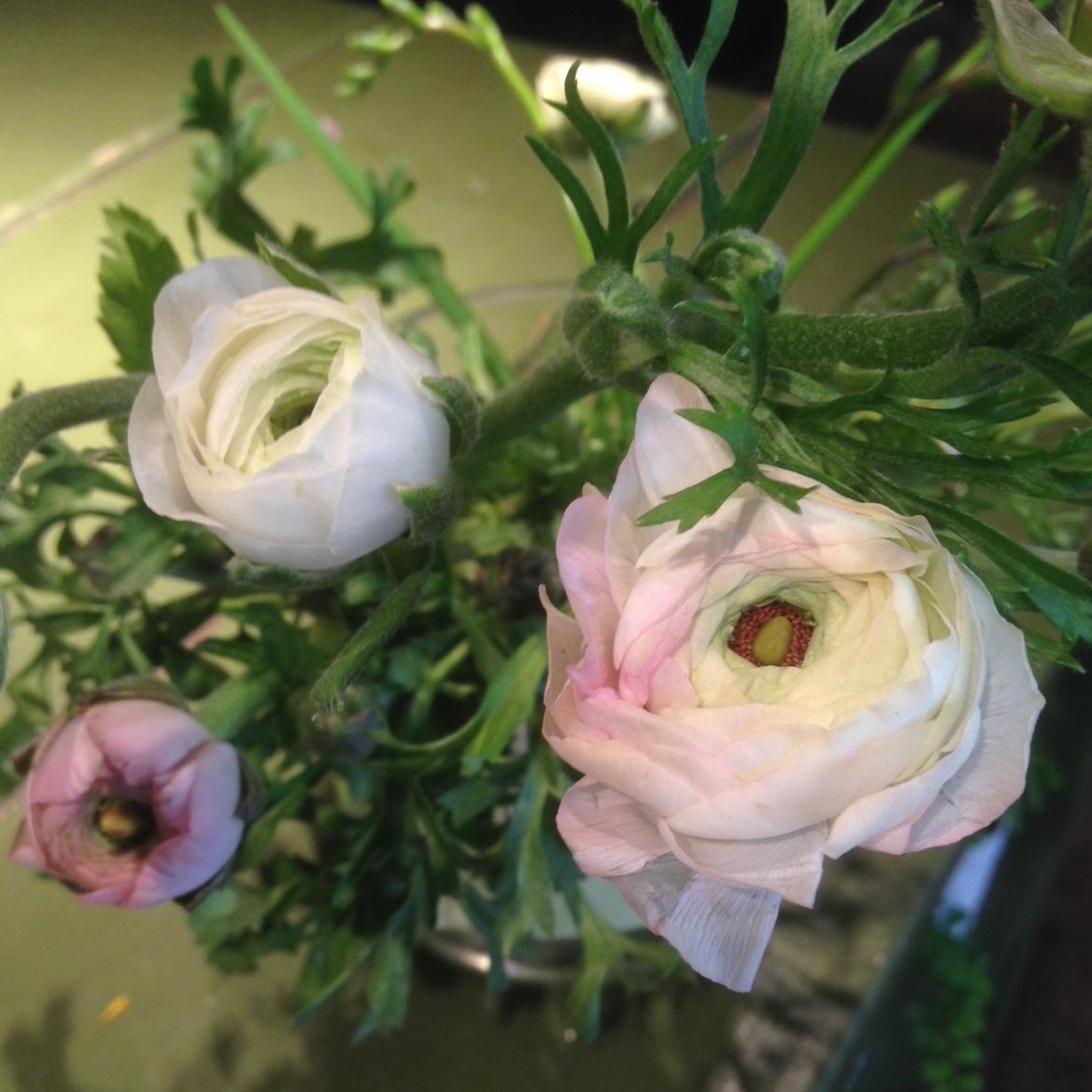 Sammy S Flowers In Season Ranunculus