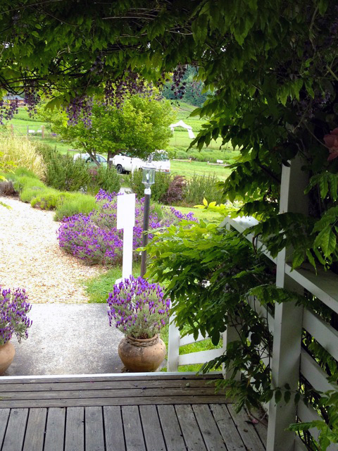 View to the Lavender Demonstration Garden at Pelindaba Lavender