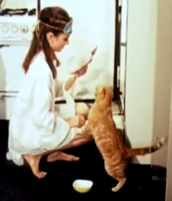 Orangey the cat with Audrey Hepburn in Breakfast at Tiffany's