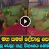 Elephant prepared for Ratnapura perahera goes on rampage