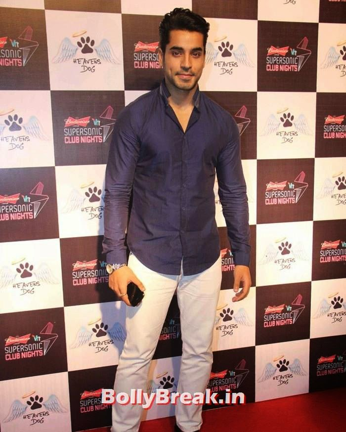 Heavens Dog Launch, Heavens Dog Launch - Indian Tv Celebs pics september 2014