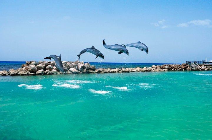 20000b7d24c Dolphin Cove na Jamaica é um dos mais populares de todos as atrações de  Ocho Rios