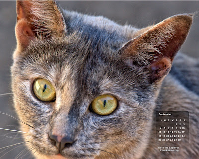 September desktop wallpaper calendar cat - free - Dora. Click for full size, right-click and select save as desktop background