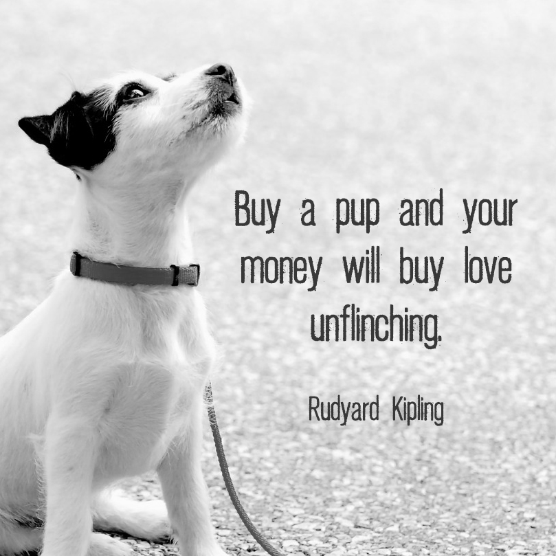 "Small puppy looking up with quote ""Buy a pup and your money will buy love unflinching."" - Rudyard Kipling"