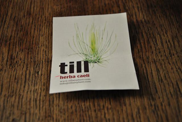 Bedienungsanleitung für die Tillandsia