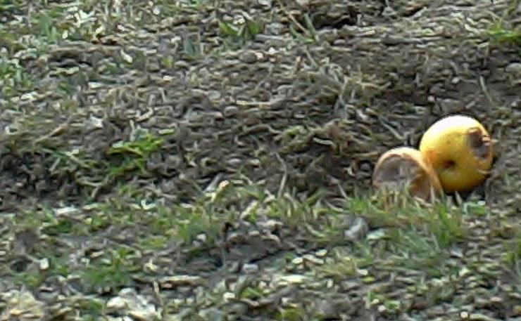 fototrappola foto trap acorn ltl 6210