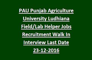 PAU Punjab Agriculture University Ludhiana Field, Lab Helper Government Jobs Recruitment Walk In Interview Last Date 23-12-2016