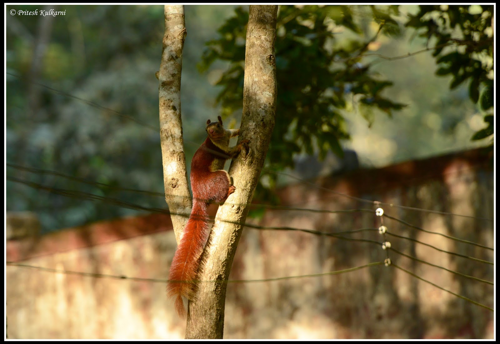 Malabar Giant Squirrel at Old Magazine House