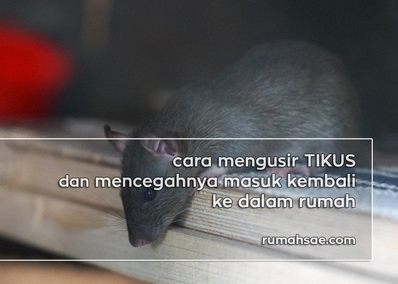Cara Mengusir Tikus dan Mencegahnya Masuk Kembali ke dalam Rumah