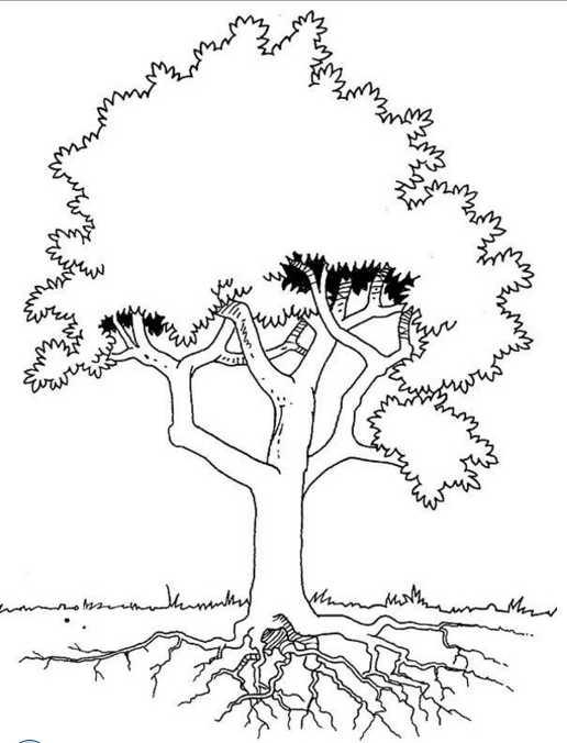 Gambar Pohon Psikotes : gambar, pohon, psikotes, Gambar, Mengenal, Psikotes, Dunia, Kerja, Ahzaa, Pohon, Rebanas
