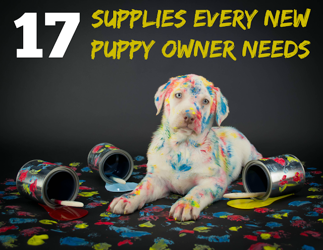 17 Supplies Every New Puppy Owner Needs