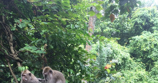 Ubud's Monkey Forest: Balinese Guide and Driver Services