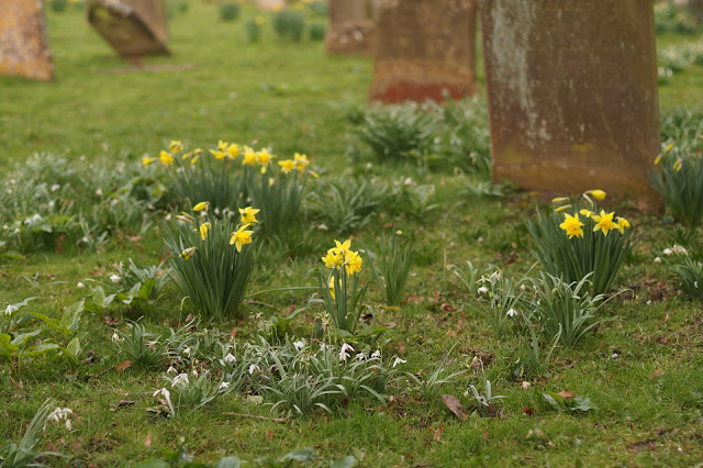 wild flowers in the church yard in spring