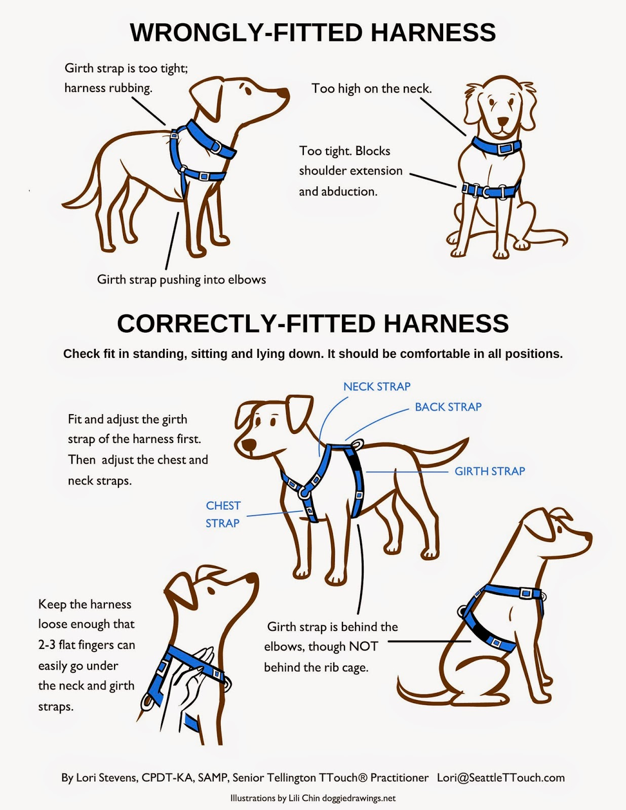 Fitting A Harness Dogs Dog Care Dog Training