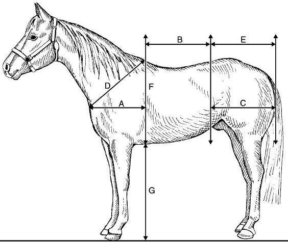 Horse Information From The Web November 2012