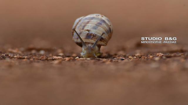 Η φωτογραφία της ημέρας: Το σαλιγκάρι