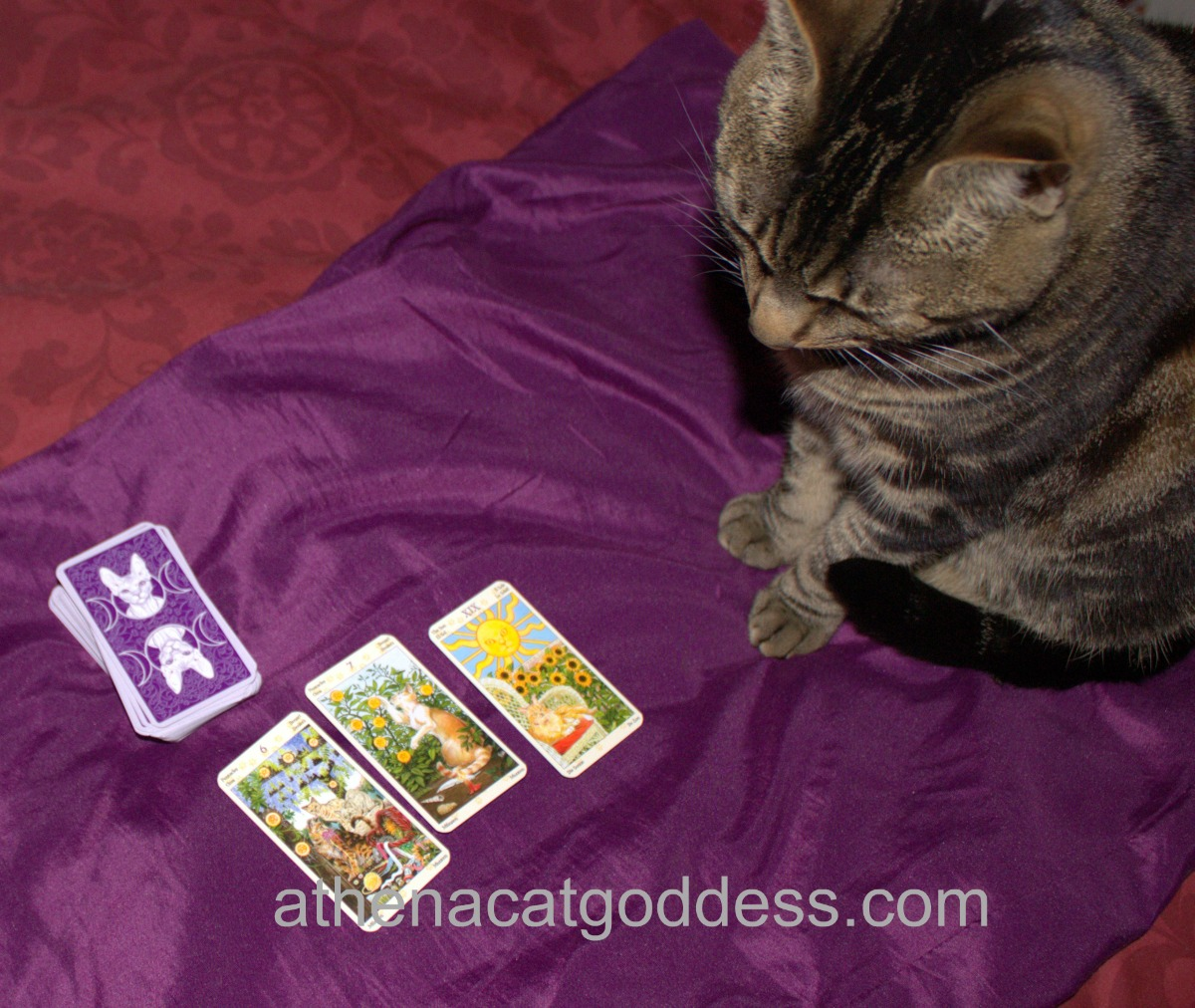 Assisting Mum with Tarot Readings