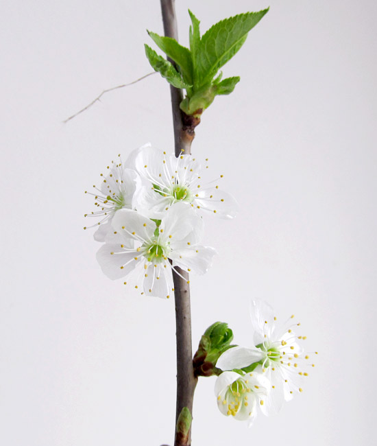 flowers, blossom, цветущая веточка