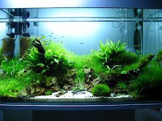 zuviel phosphat im aquarium