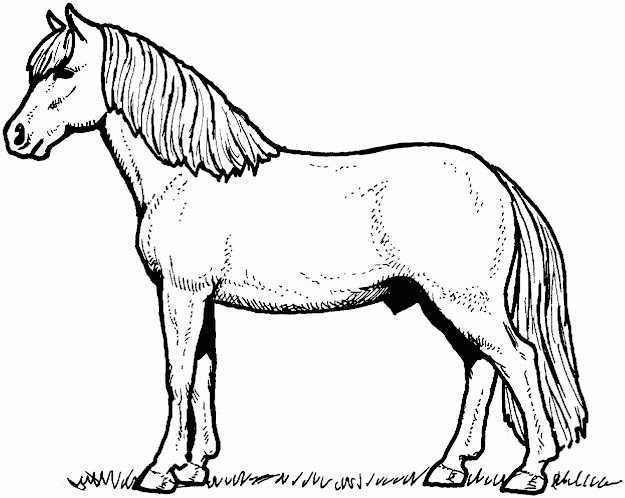 Young Colt Horse Colornumbers Coloring  Cartoon Horse Coloring Page Horse  Color Page