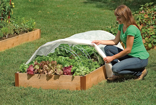 You can protect with row covers or low tunnels.