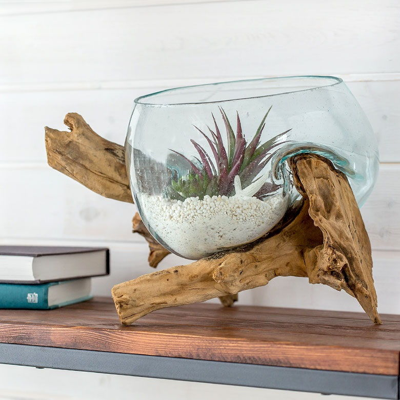 Techniques for Fish Bowl with Plant on Top Only Very Few People Know