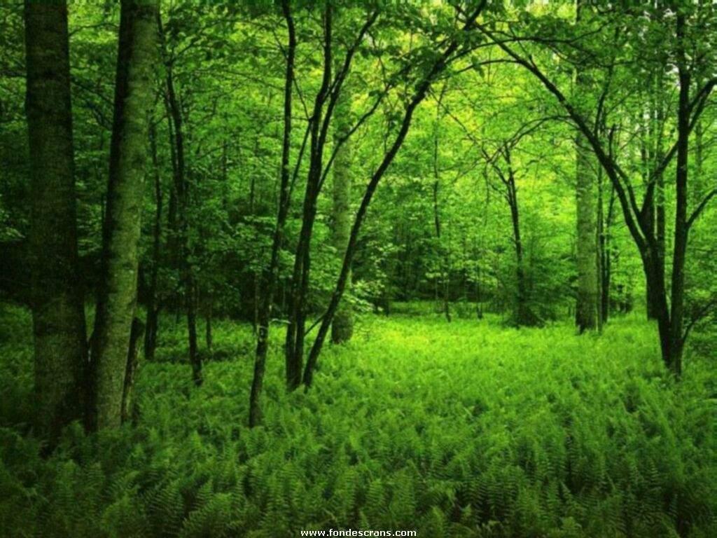 Tutorial Photoshop Mobil Dalam Hutan Tutorial