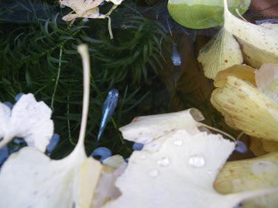 ビオトープ 枯れ葉 越冬