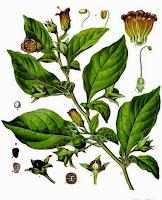 Pengobatan mata minus dan cara menyembuhkannya dengan herbal
